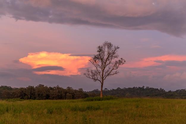 Nascer do sol sobre pastagens do santuário de vida selvagem phu khieo, tailândia