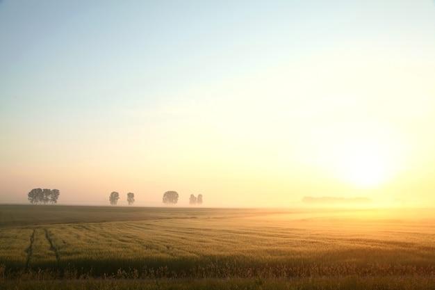 Nascer do sol sobre um campo de grãos com nevoeiro