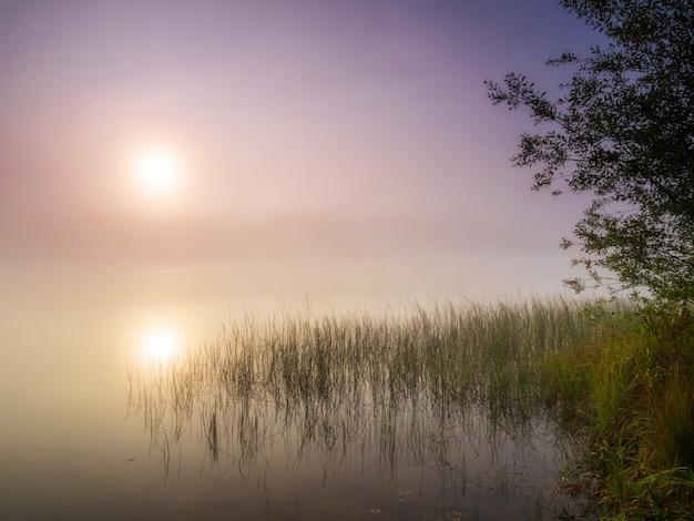 Nascer do sol sobre um lago enevoado. paisagem de verão. natureza selvagem
