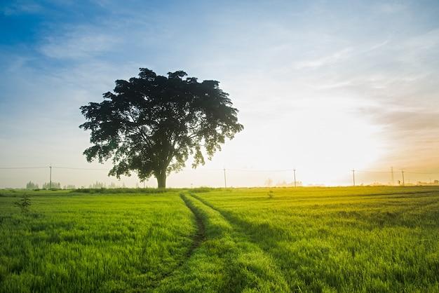 Nascer do sol verde do pasto.