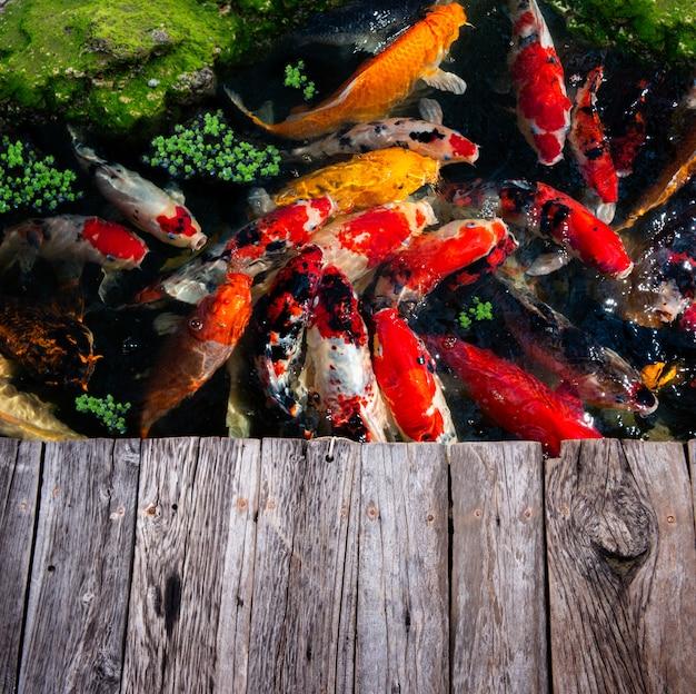 Natação de grupo de peixes koi.