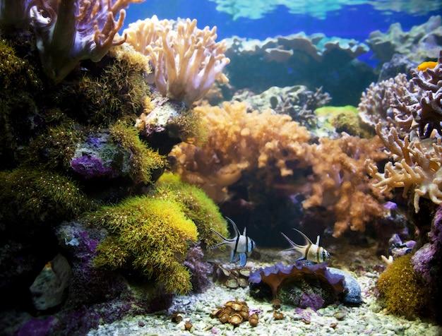 Natação dos peixes no fundo do mar