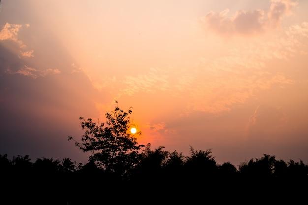 Natural do nascer do sol do por do sol para o céu dramático brilhante da nuvem com árvores de coco. ews do conceito de nuture