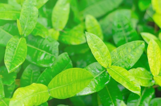 Natural verde deixa o fundo, o efeito bokeh, fundos abstratos sazonais