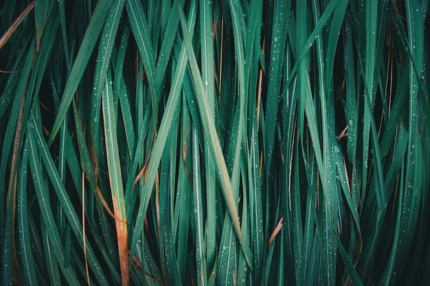 Natureza abstrata da textura da folha da grama verde.