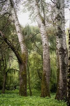 Natureza bela. close-up de musgo verde em uma árvore