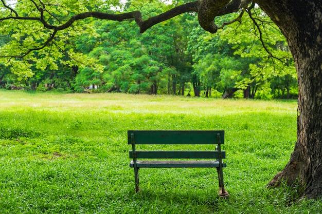 Natureza bonita no parque com o banco sob a árvore.