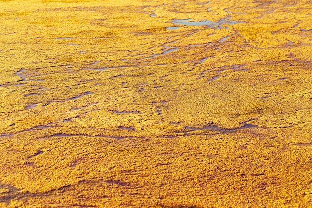 Natureza brilhante textura da superfície da água na luz solar ondulações da água em um pequeno lago coberto de mato