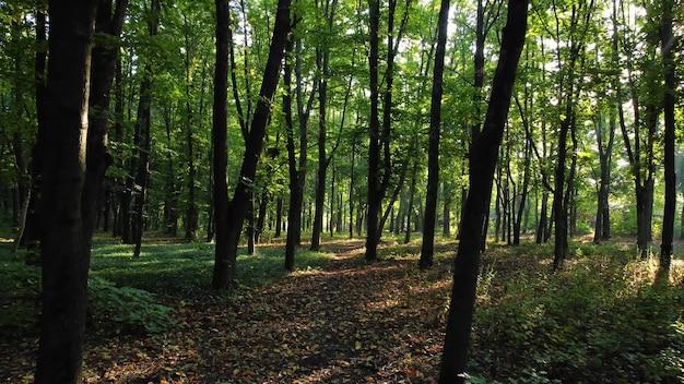 Natureza da floresta caminhada pela manhã com o nascer do sol. os raios do sol rompem as folhas e galhos das árvores. natureza fresca de férias no parque.