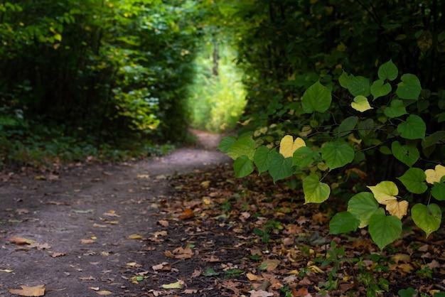 Natureza da floresta de outono floresta colorida com raios de sol brilhando através de galhos de árvores paisagens da natureza com luz do sol e folhas caídas