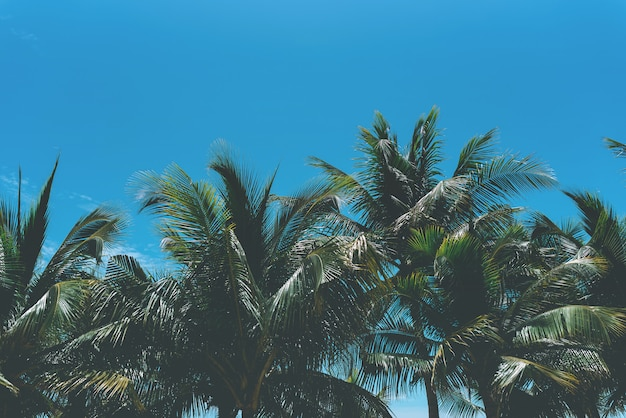 Natureza da palmeira e do céu do coco no fundo do mar com espaço da cópia.