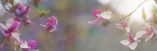 Natureza da primavera com flor rosa.