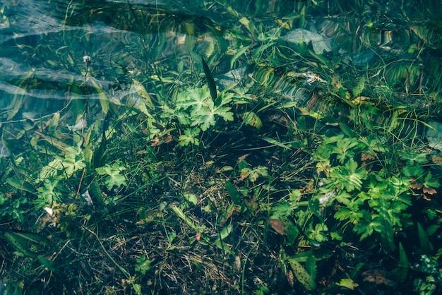 Natureza da vegetação verde em águas claras flora subaquática