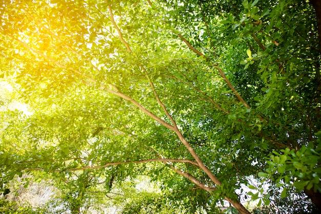 Natureza de fundos verdes da luz solar da folha.