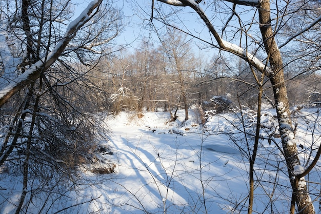 Natureza de inverno