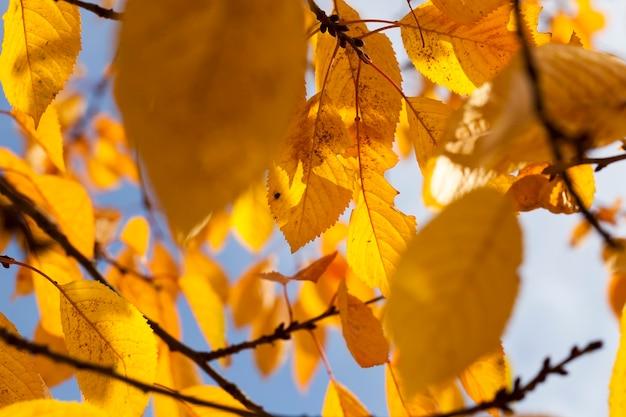 Natureza de outono com árvores multicoloridas que mudam a cor da folhagem com as mudanças sazonais