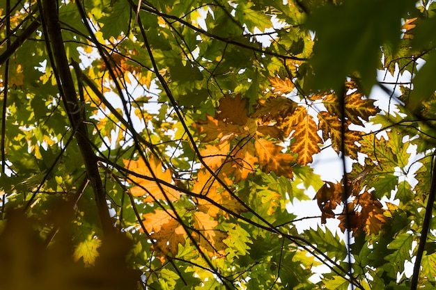 Natureza de outono com mudanças naturais, natureza real