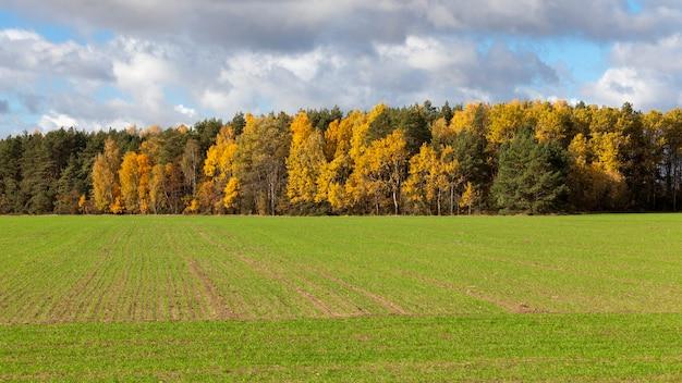 Natureza de outono