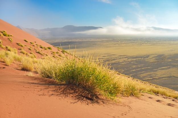 Natureza do deserto do namibe, namíbia, áfrica do sul