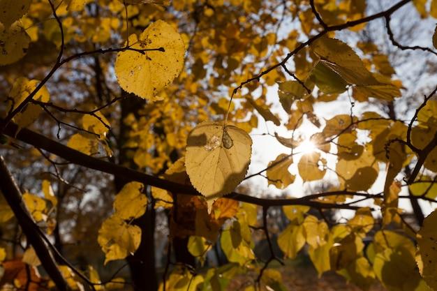 Natureza do outono e sua influência na natureza, plantas durante ou antes da queda das folhas com características específicas do outono