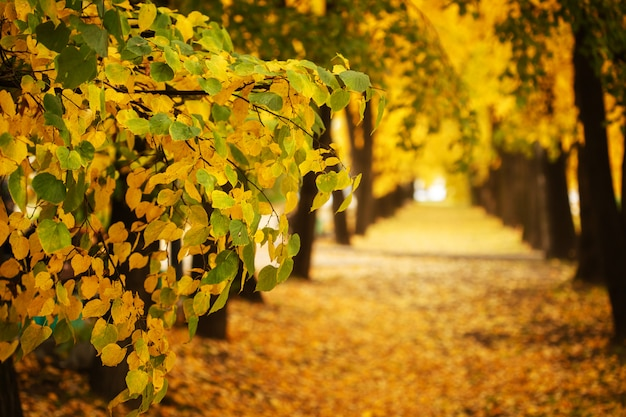 Natureza do outono no parque da cidade ao ar livre
