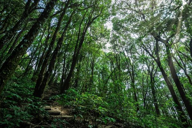 Natureza e floresta