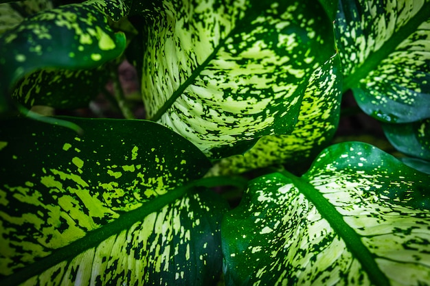 Natureza e folha verde