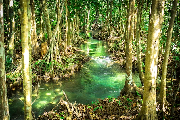 Natureza, em, krabi, tailandia