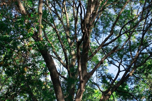 Natureza. floresta verde em um dia ensolarado