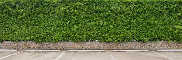 Natureza folha verde e textura, deixa parede no estacionamento para o fundo