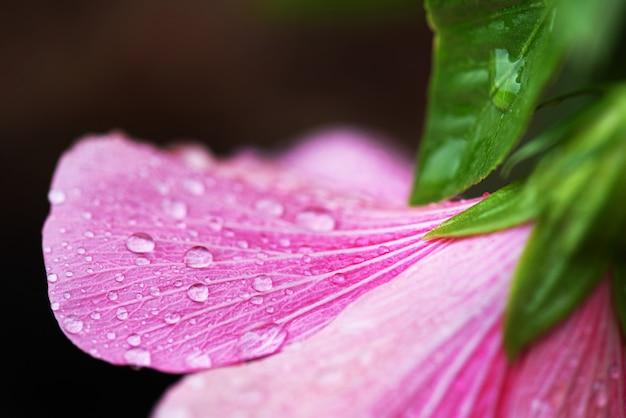 Natureza macro tiro gota de água na flor de flor de hibisco