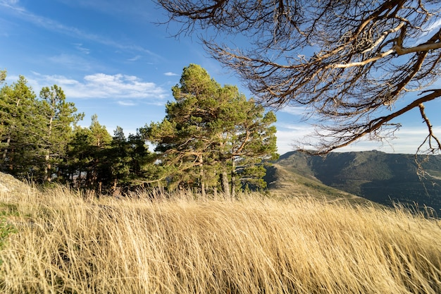 Natureza montanha planta árvores