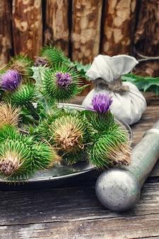 Natureza morta com ervas medicinais de colheita