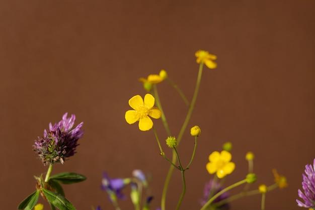 Natureza morta com flores silvestres amarelas sobre fundo marrom. composição moderna e moderna com flores secas, sombras escuras vista lateral
