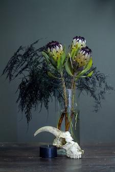 Natureza morta com um buquê de protea, vela preta e um crânio de cabra em um fundo escuro, foco seletivo
