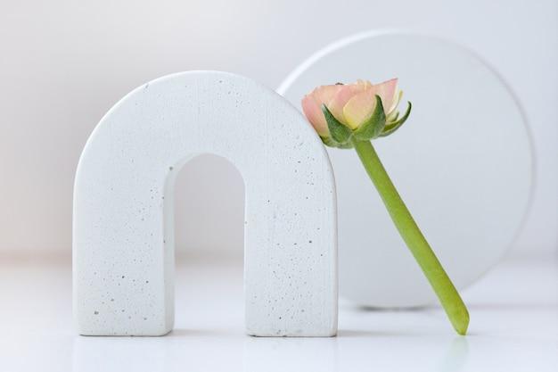 Natureza morta de primavera moderna com formas geométricas e flor de ranúnculo em um branco neutro