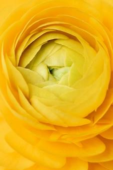 Natureza-morta em close de uma flor dentro de casa