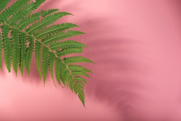 Natureza morta floral minimalista com folha de samambaia e sua sombra contra um fundo rosa.