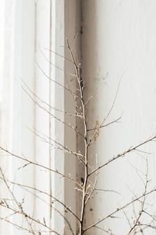 Natureza morta. foto de um galho seco na vista lateral da janela antiga