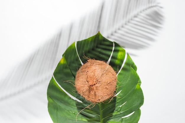 Natureza-morta tropical minimalista. coco na folha de monstera com sombras de folhas de palmeira em fundo branco. conceito de moda criativa.