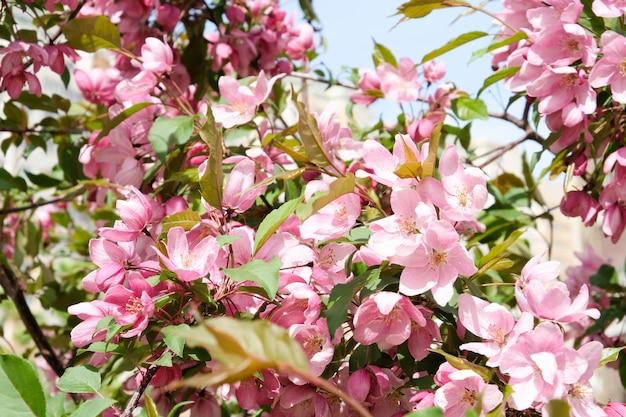 Natureza na primavera. árvores em flor.