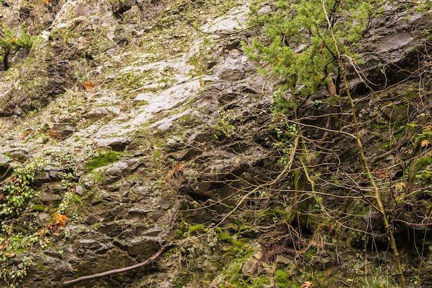 Natureza outonal com pedras e folhas nas montanhas troodos em chipre
