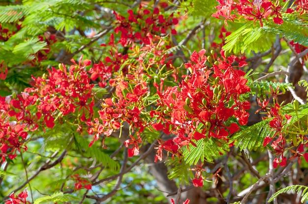Natureza planta madeira de folha e flor vermelha com casa