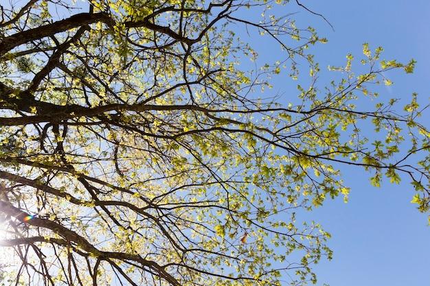 Natureza real com árvores verdes e grama iluminada pela luz solar, descanso real e distração na natureza