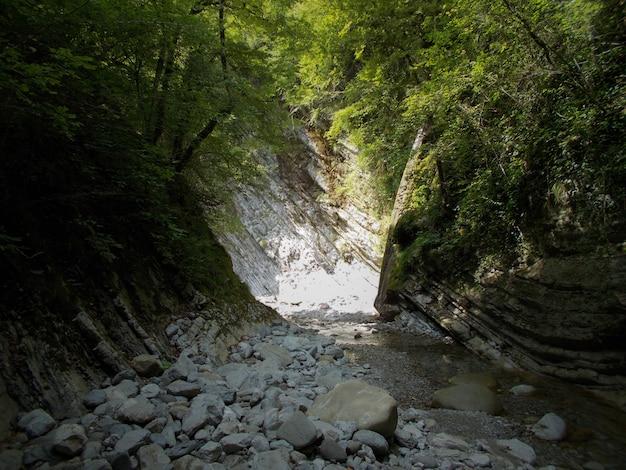 Natureza selvagem com árvores, plantas, riachos e rochas. um pequeno riacho no desfiladeiro do cânion da montanha no verão.