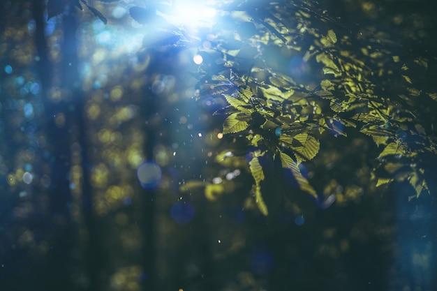 Natureza verão folhagem fundo, luz bokeh verão floresta textura. luz do sol de primavera