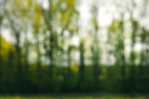 Natureza verde no lado, floresta