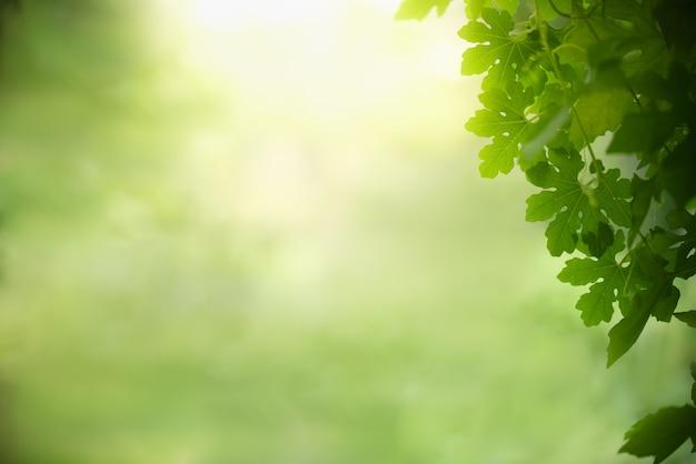 Natureza vista folha verde sobre fundo verde turva sob a luz solar.