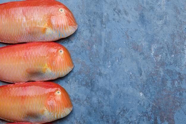 Navalha perolado dos peixes tropicais bonitos do mar vermelho em um fundo azul. xyrichtys novacula, frutos do mar do mar mediterrâneo.