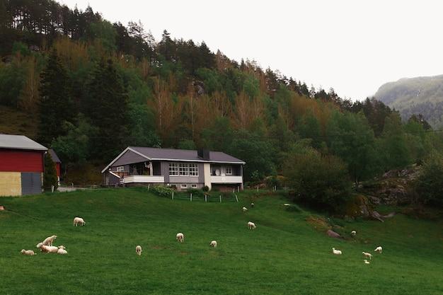 Navios no gramado verde antes da casa na floresta